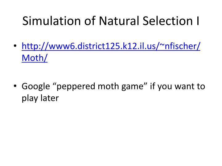 Natural Selection Moths Simulation