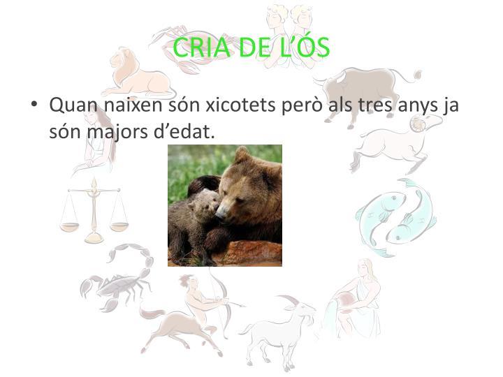 CRIA DE L'ÓS
