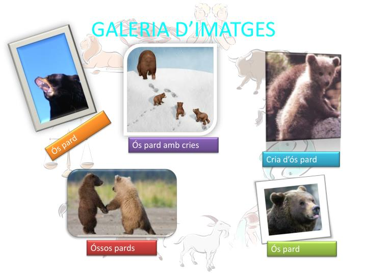 GALERIA D'IMATGES