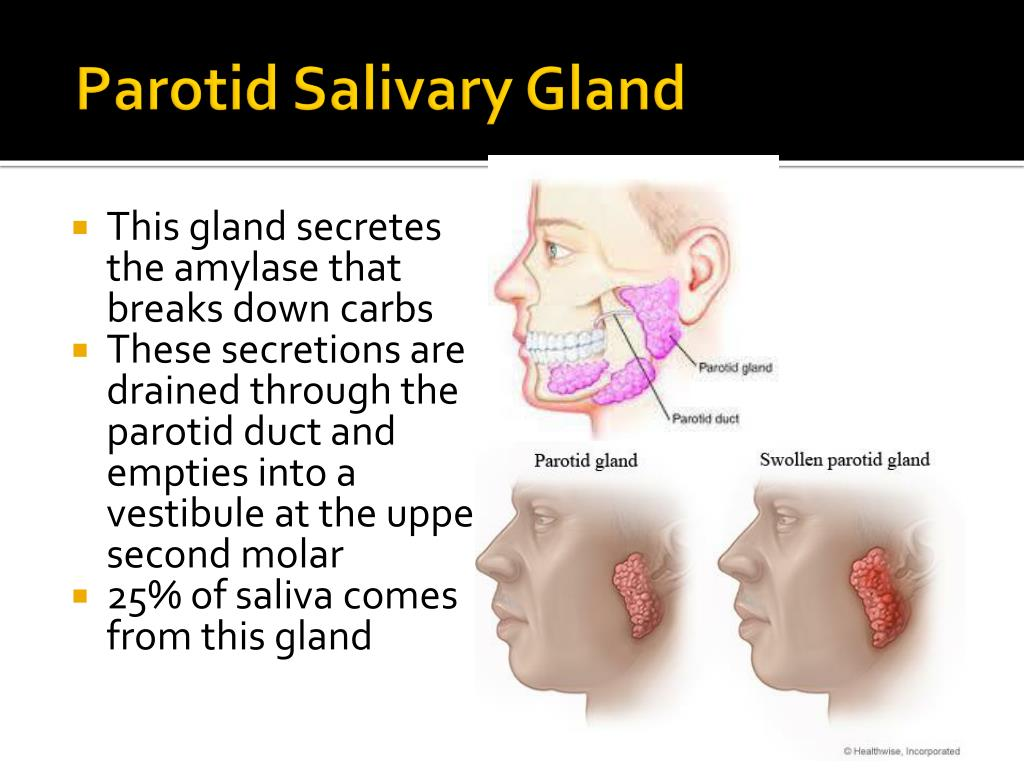 PPT - Oral Cavity, Teeth, Tongue, and Salivary Glands