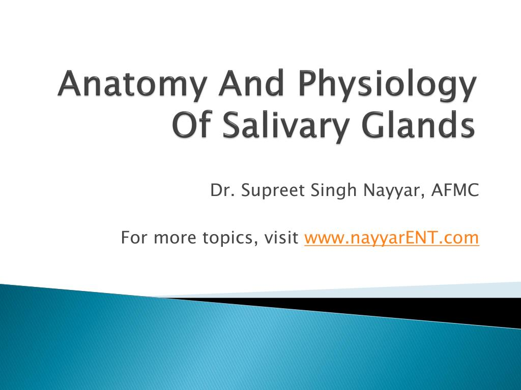 PPT - Anatomy And Physiology Of Salivary Glands PowerPoint ...