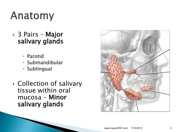 pictorial essay salivary gland imaging Sonography allows a detailed morphological evaluation of the gland and has an among the various imaging parotid abscess: mini-pictorial essay g viselner.