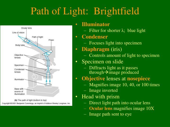 Path of light brightfield