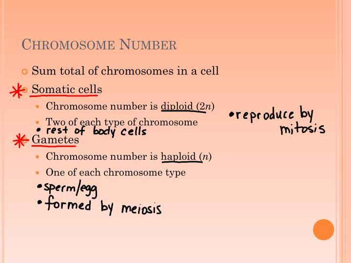 Chromosome Number