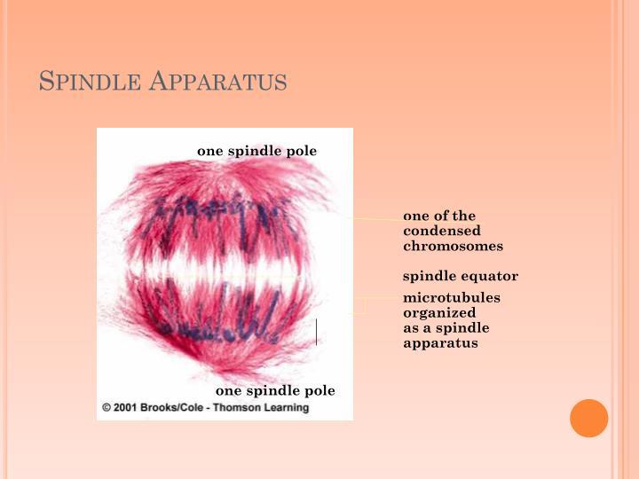 Spindle Apparatus