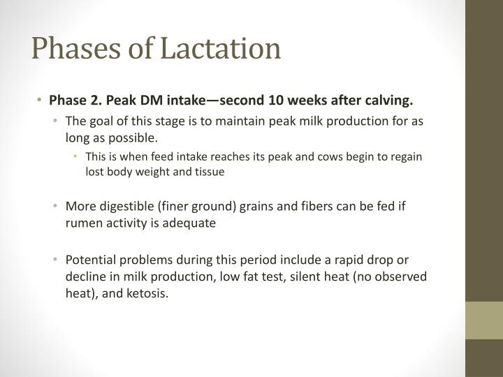 Phases of Lactation