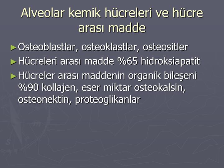 Alveolar kemik hücreleri ve hücre arası madde