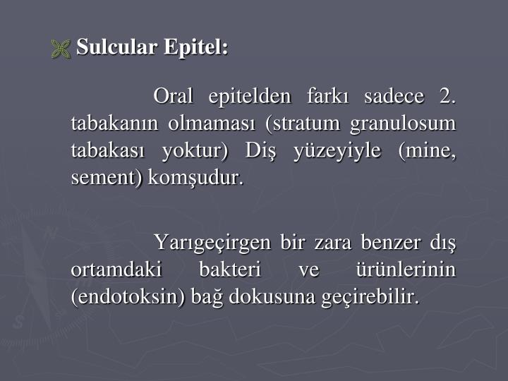 Sulcular Epitel