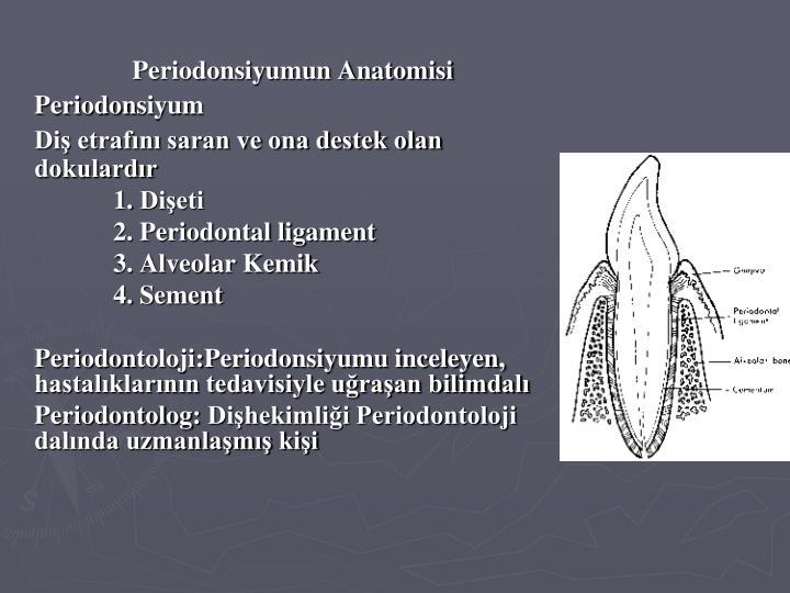 Periodonsiyumun Anatomisi