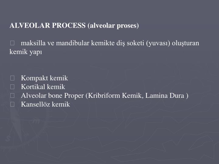 ALVEOLAR PROCESS (alveolar proses)