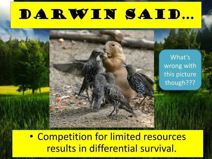 Darwin said…