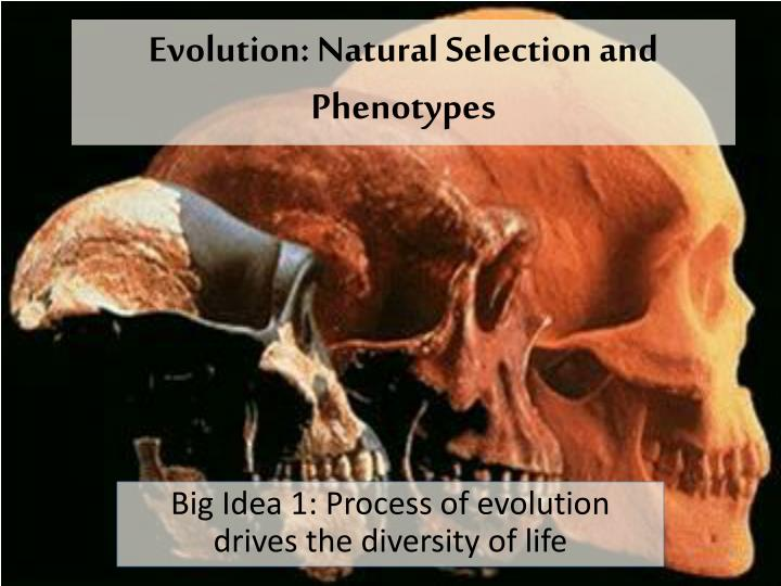 a look at the natural evolutionary process The theory of evolution is a fact it has been through more scrutiny and investigation than most other scientific claims here's how we know its true.