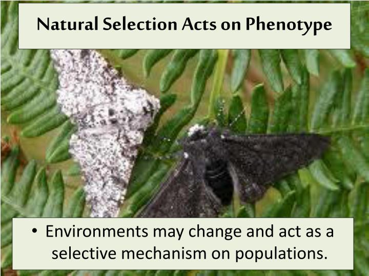 Natural Selection Acts on Phenotype