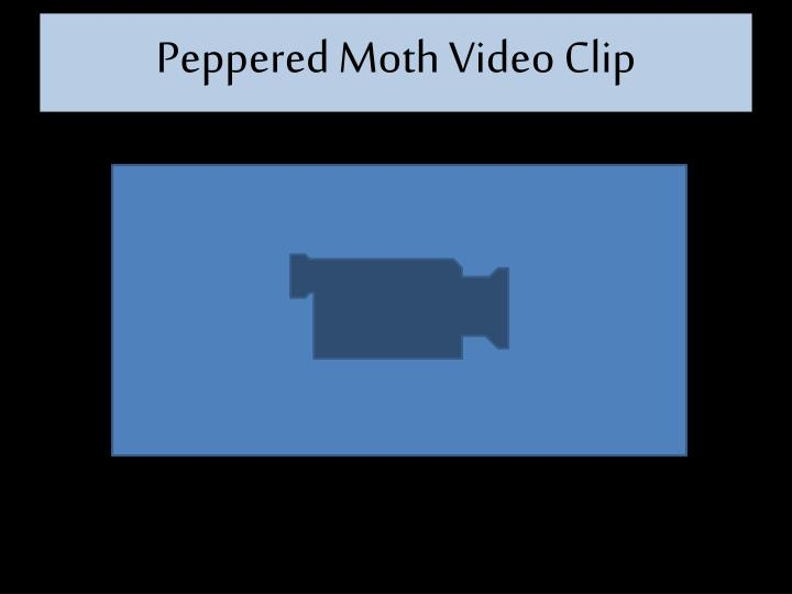 Peppered Moth Video Clip