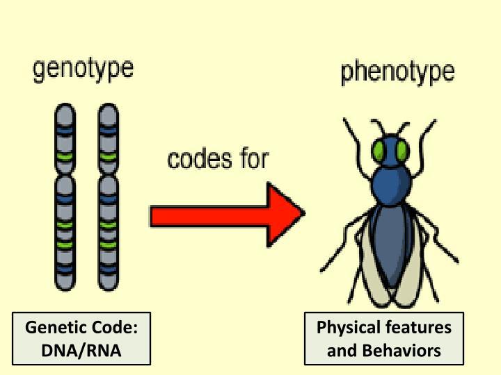 Genetic Code: DNA/RNA