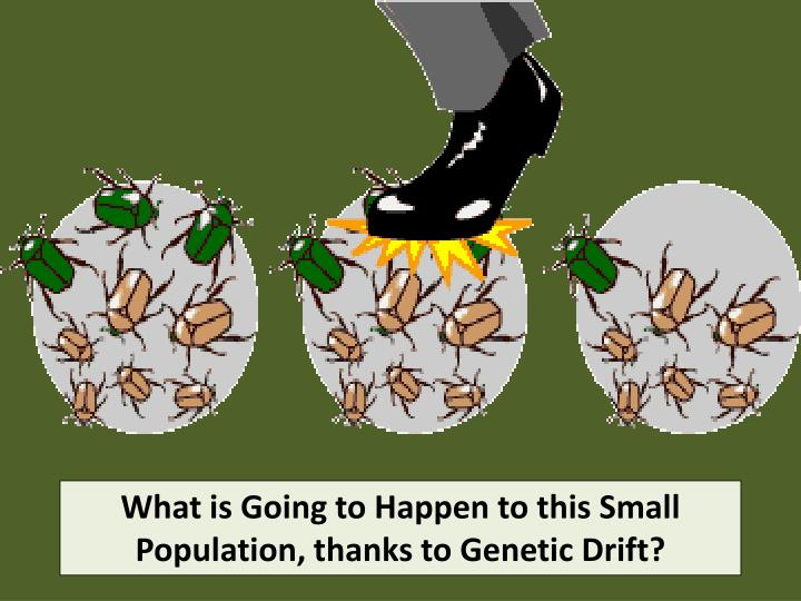 What is Going to Happen to this Small Population, thanks to Genetic Drift?