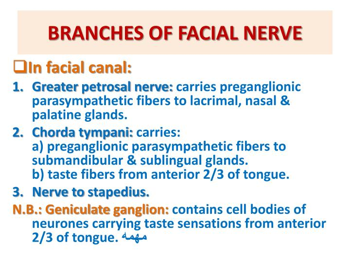 BRANCHES OF FACIAL NERVE