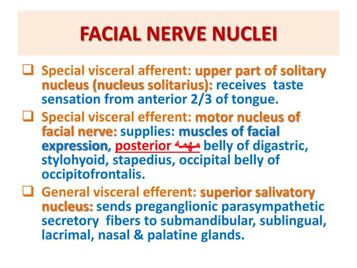 FACIAL NERVE NUCLEI