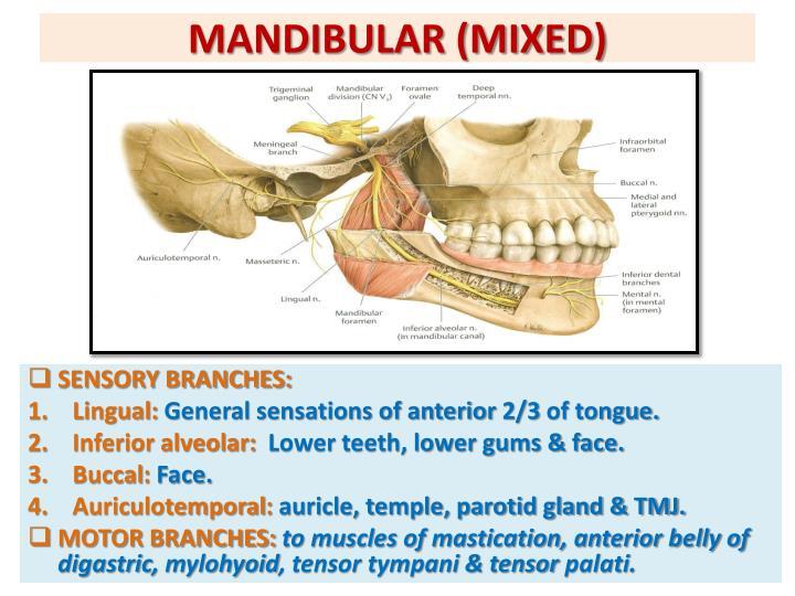 MANDIBULAR (MIXED)