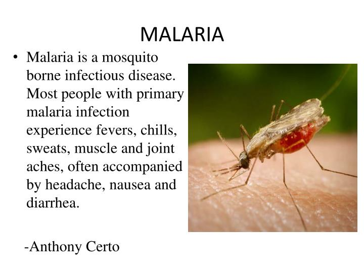 malaria mosquito borne infectious disease biology essay Infectious disease: malaria essay 595 words   3 pages section 1 malaria general information malaria is a common infectious disease found mainly in the tropics but in rare circumstances can be found in temperate areas.