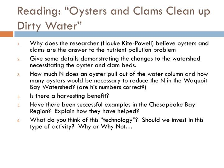 oysters helping clean up polluted waters
