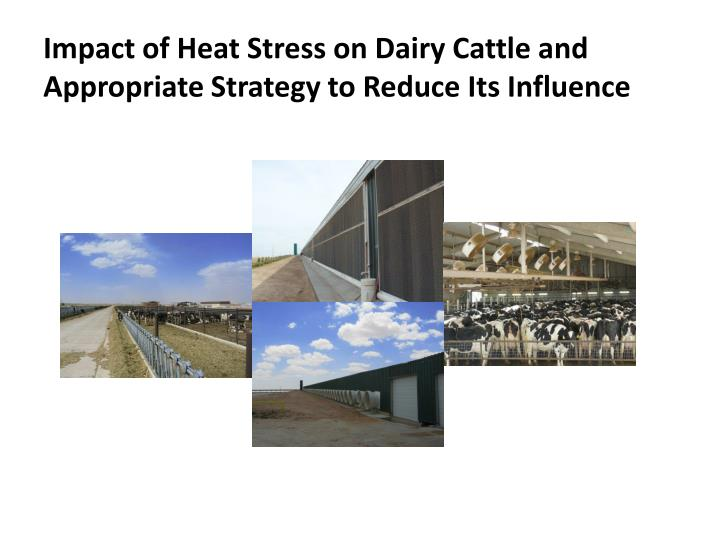 impact of heat stress on dairy cattle and appropriate strategy to reduce its influence n.