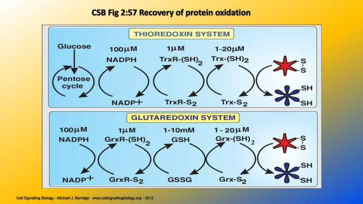 CSB Fig 2:57 Recovery of protein oxidation