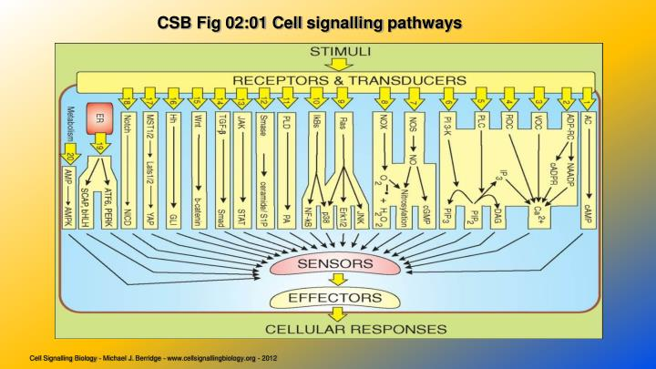 CSB Fig 02:01 Cell