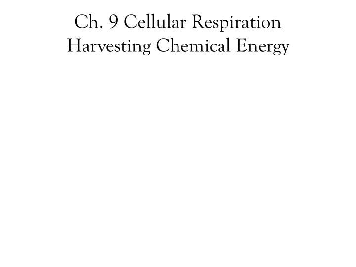 Ch 9 cellular respiration harvesting chemical energy
