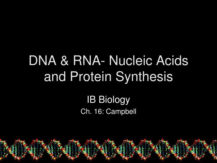 dna rna nucleic acids and protein synthesis n.
