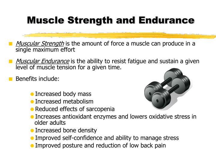 muscular strength and endurance Increase the size of the muscle cells and the amount of blood that is delivered to the muscle in some sports, muscular strength can be more important than muscular endurance true.