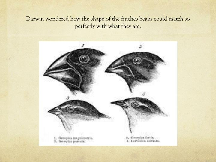Darwin wondered how the shape of the finches beaks could