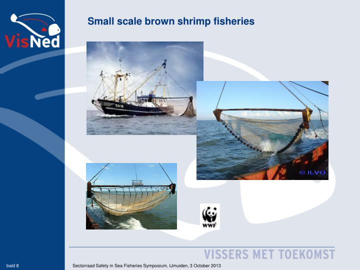 Small scale brown shrimp fisheries