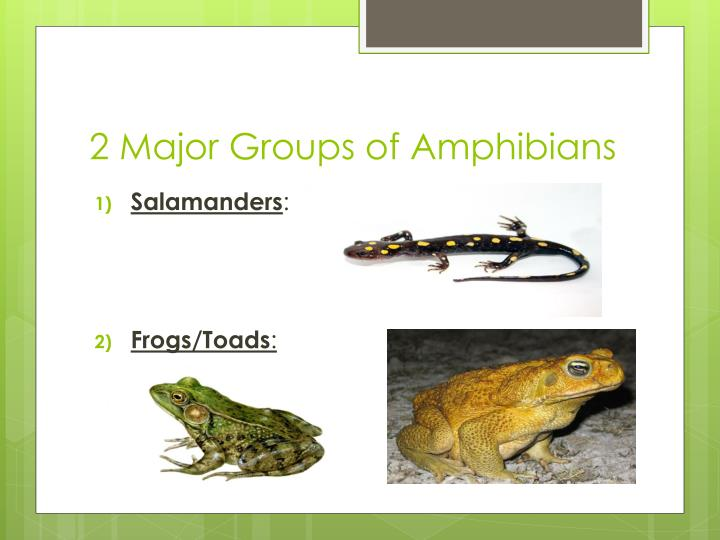 2 Major Groups of Amphibians