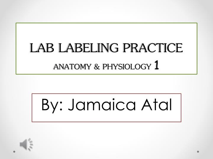 Ppt Lab Labeling Practice Anatomy Physiology 1 Powerpoint