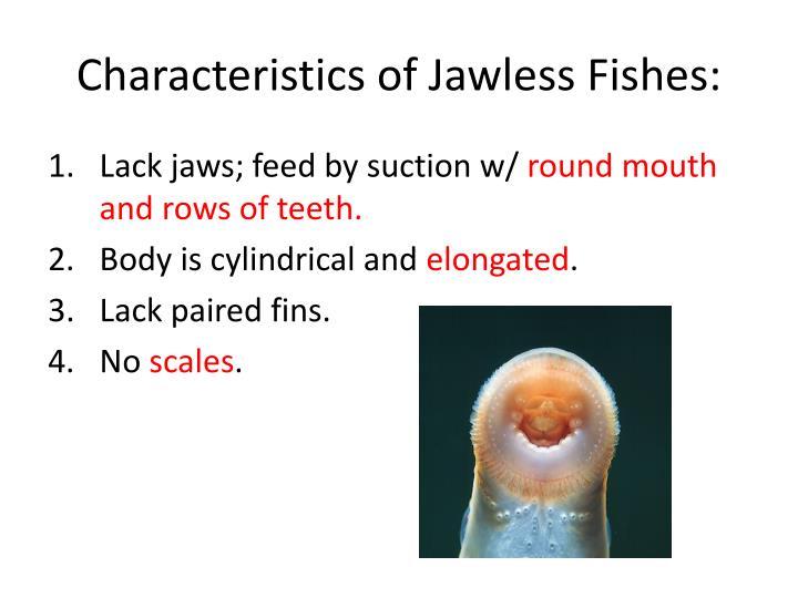 characteristics of flies
