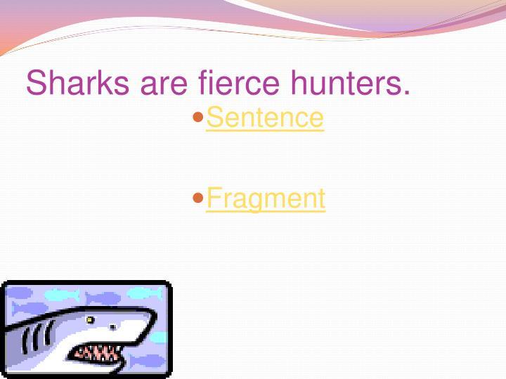 Sharks are fierce hunters.