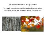 temperate forest adaptations