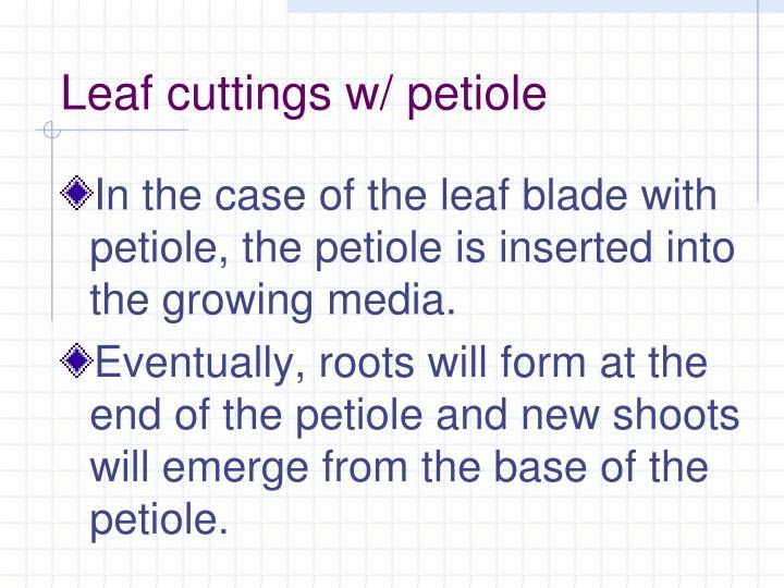 Leaf cuttings w/ petiole