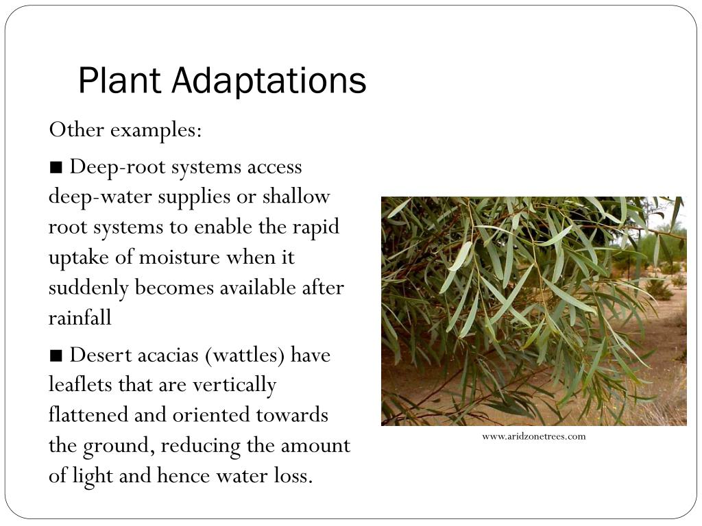 Ppt Unit A Local Ecosystem Topic 7 Adaptations Powerpoint