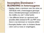 incomplete dominance blending in heterozygotes