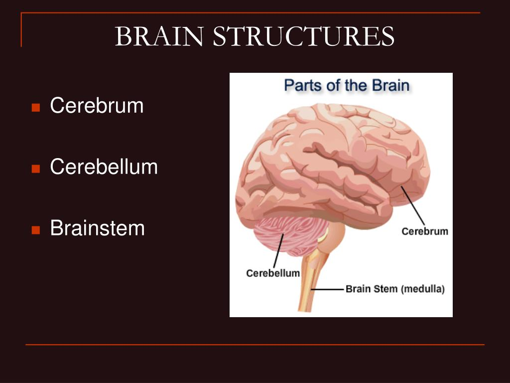 PPT - Divisions of the Nervous System PowerPoint ...