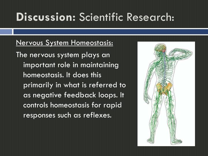 the importance of homeostasis in maintaining