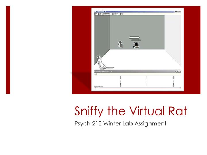 sniffy the virtual rat Showing 5 download results for sniffy the virtual rat pro v 20 we have 423,652 downloads currently available for our members for more accurate search results for sniffy the virtual rat pro v 20 it's best to avoid using common keywords like: crack, torrent, keygen, unlocked, serial, etc.