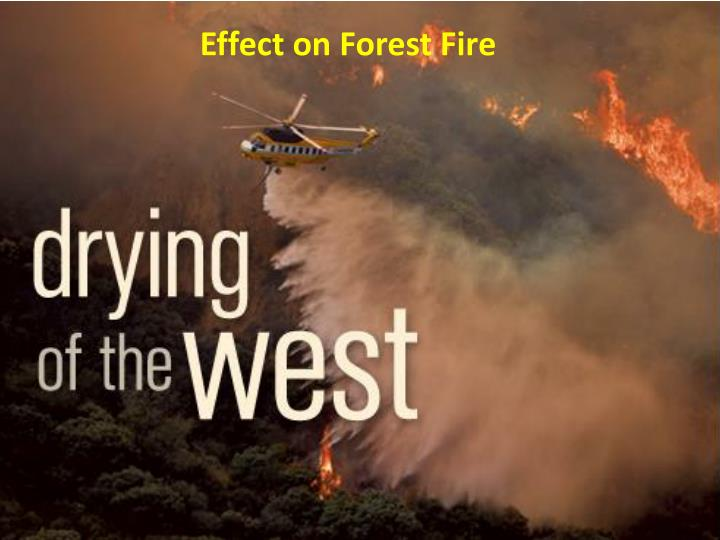 Effect on Forest Fire