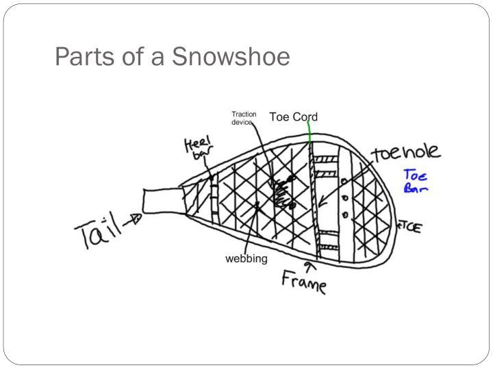 ppt - snowshoeing powerpoint presentation