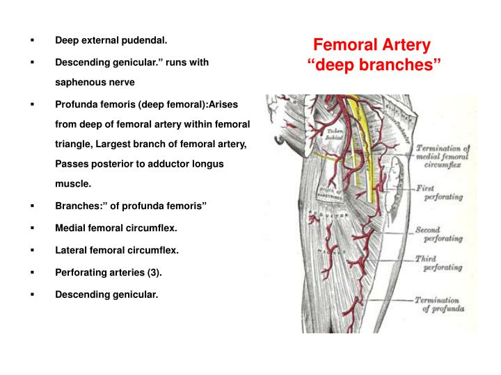 Ppt Vascular Problems Of The Upper And Lower Limbs Powerpoint