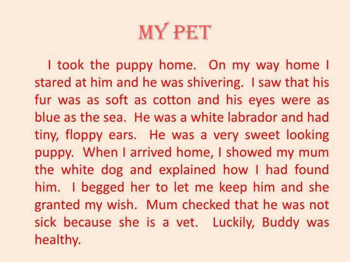 My pet2
