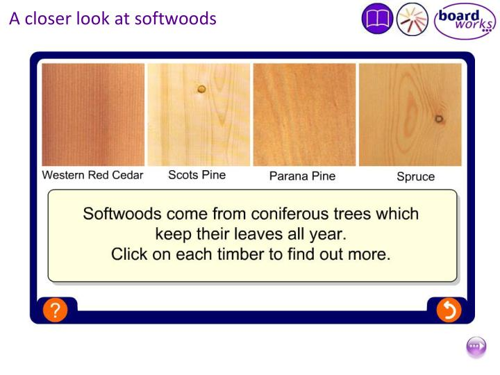 A closer look at softwoods