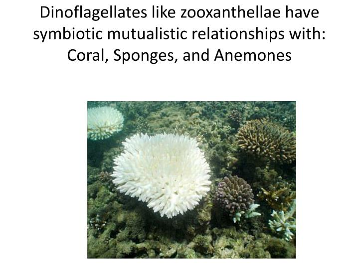 Dinoflagellates like zooxanthellae have symbiotic mutualistic relationships with: Coral, Sponges, and Anemones